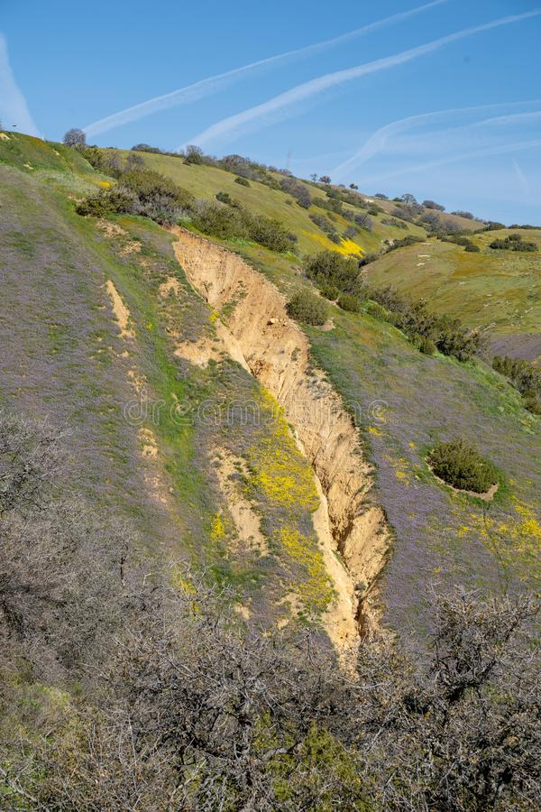 View of the San Andreas Fault along Highway 58 in California, at Carrizo Plain National Monument. Wildflowers in purple and yellow. During super bloom stock photo