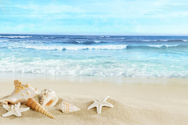 A view of the beach with shells in the sand. royalty free stock photos