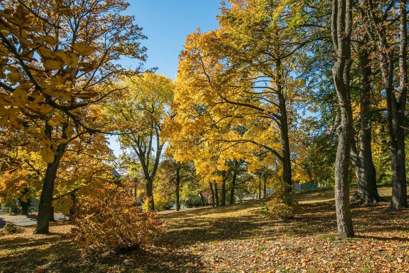 View of scenic colorful autumn landscape stock photo