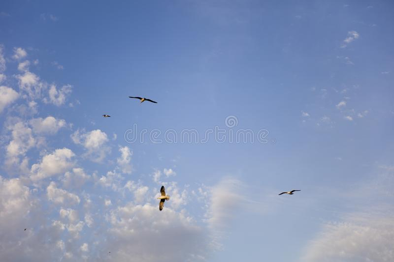 A seagull birds flying in the blue sky. View at a seagull birds flying in the blue sky royalty free stock images
