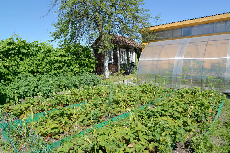 View of the seasonal dacha in the summer. Russia royalty free stock photo