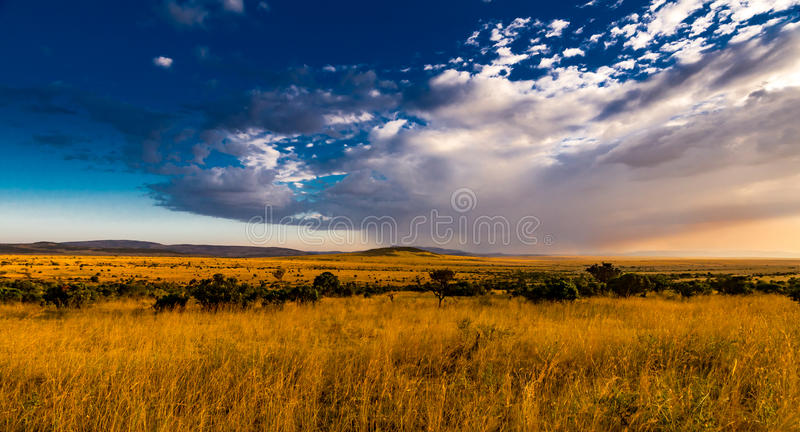 View of the Serengeti royalty free stock photos