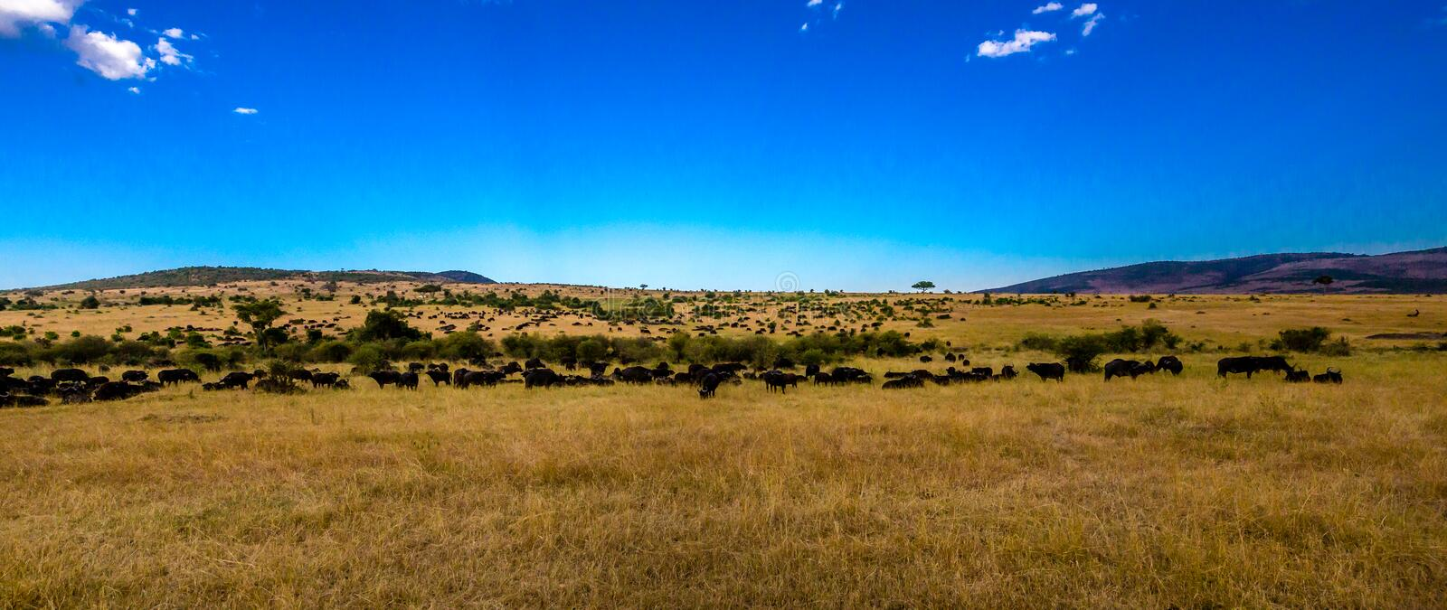 View of the Serengeti stock photography