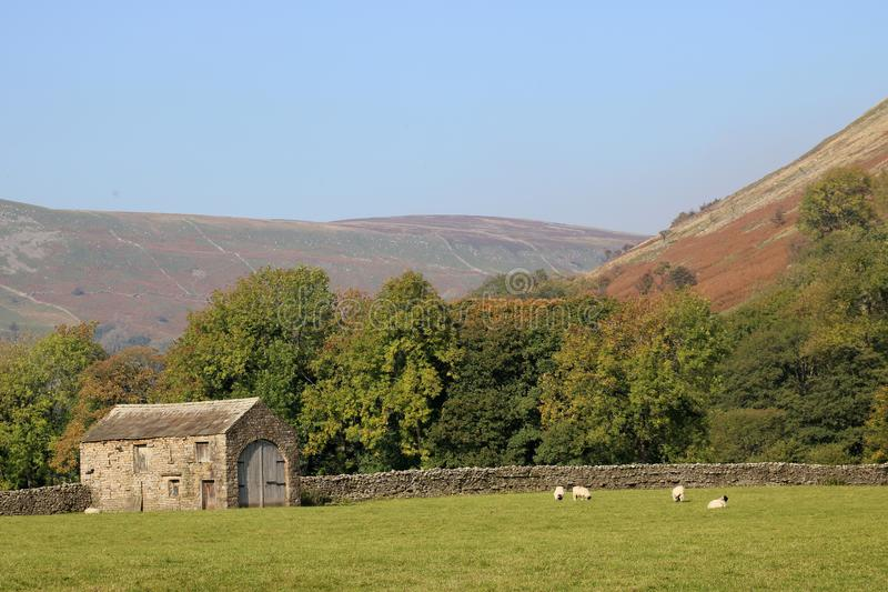 Field barn or cowhouse, meadow, sheep, Swaledale royalty free stock photos