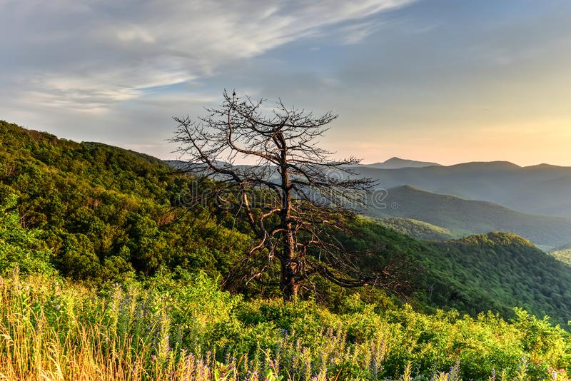 Shenandoah National Park - Virginia stock photography