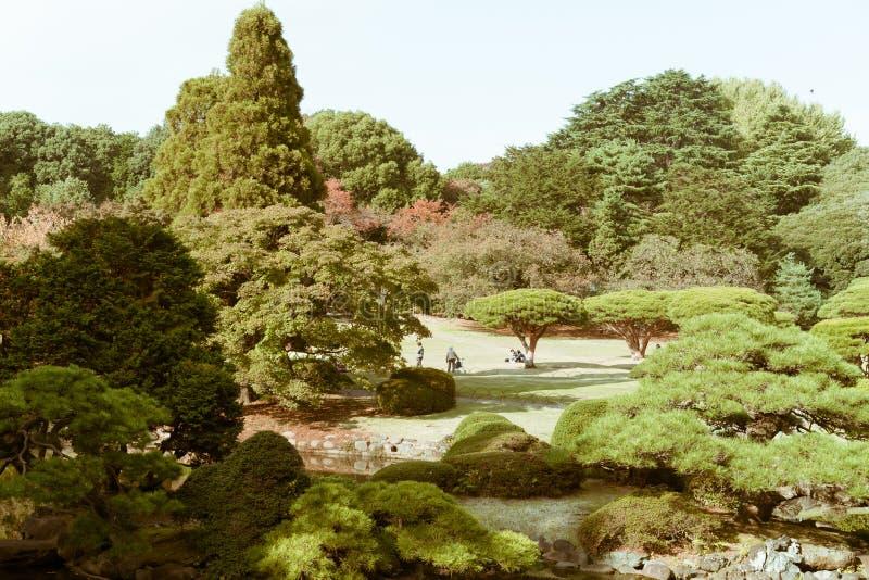 View of Shinjuku National Garden during autumn royalty free stock image