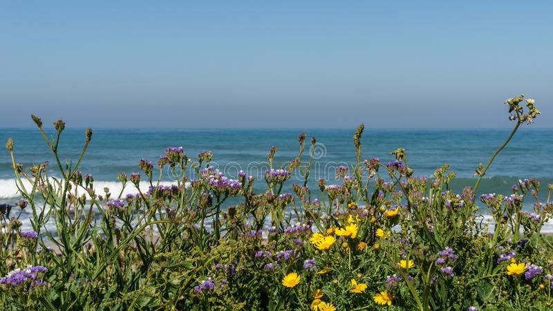View of the shores of the Mediterranean sea with purple and yellow flowers on the foreground. royalty free stock photo