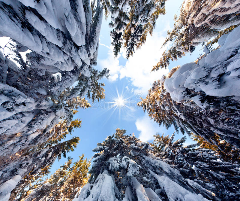 View of the sky in a snowy forest. View of the sky in the snowy forest stock images
