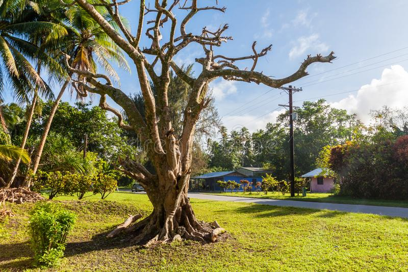 View of small town Laura with colorful houses, green lawns, palm trees, and dry dead tree. Marshall islands, Micronesia, Oceania. stock photos