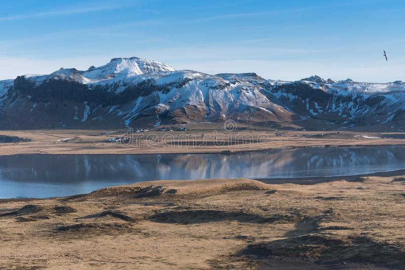 View of snow-capped Reynisfjall mountains from Dyrholaey, Iceland. With a bird soaring above royalty free stock photos