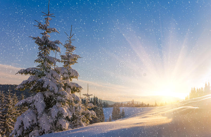 View of snow-covered conifer trees and snow flakes at sunrise. Merry Christmas's or New Year's background. stock photo