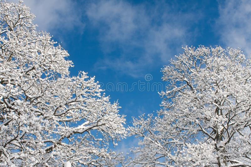 Snow covered trees in the winter park. View of Snow covered trees in the winter park stock image