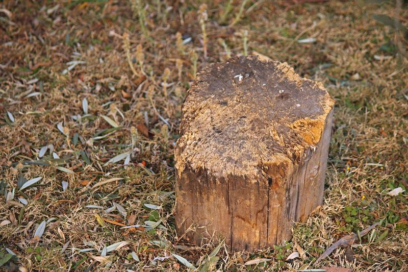SOLID PIECE OF TREE STUMP BEING USED AS WOOD CHOPPING BLOCK royalty free stock photography