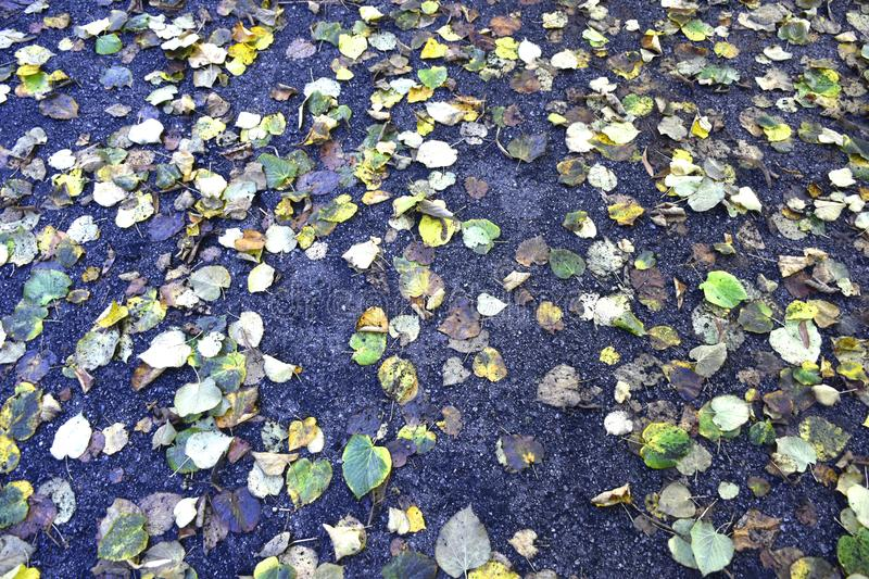 View of some leaves fallen from trees stock photo