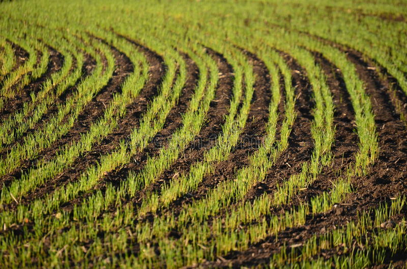 View sown fields , southern Bohemia royalty free stock photo