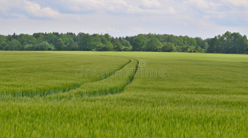 View sown fields , southern Bohemia stock image