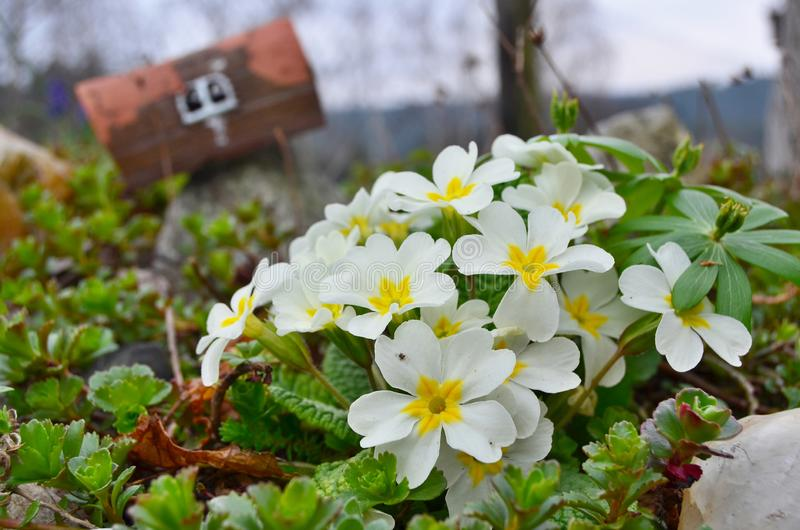 View of spring flowers, South Bohemia. Czech Republic royalty free stock image