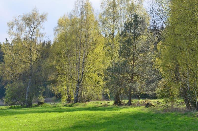 View spring landscape, southern Bohemia royalty free stock photos