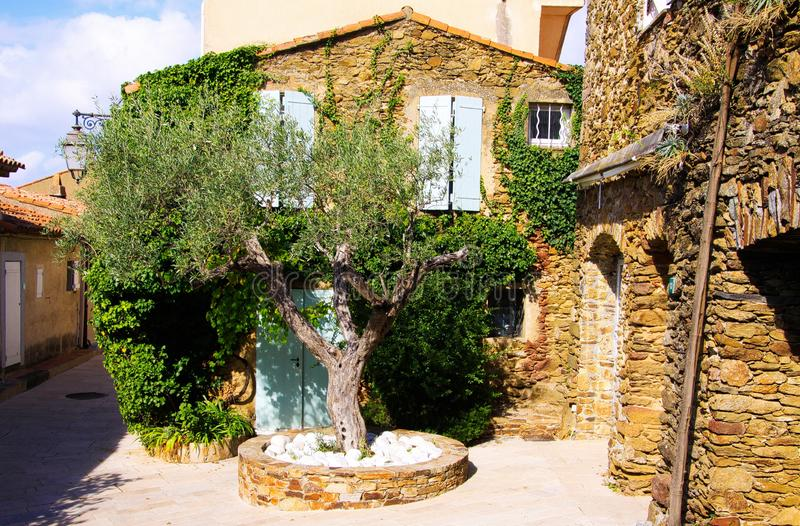 View on square with green olive tree and typical French mediterranean stone house covered with ivy in bright natural sun light royalty free stock photography