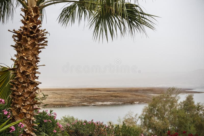 View of the stony shore of the Dead Sea with palm and flowers. In the foreground stock photos
