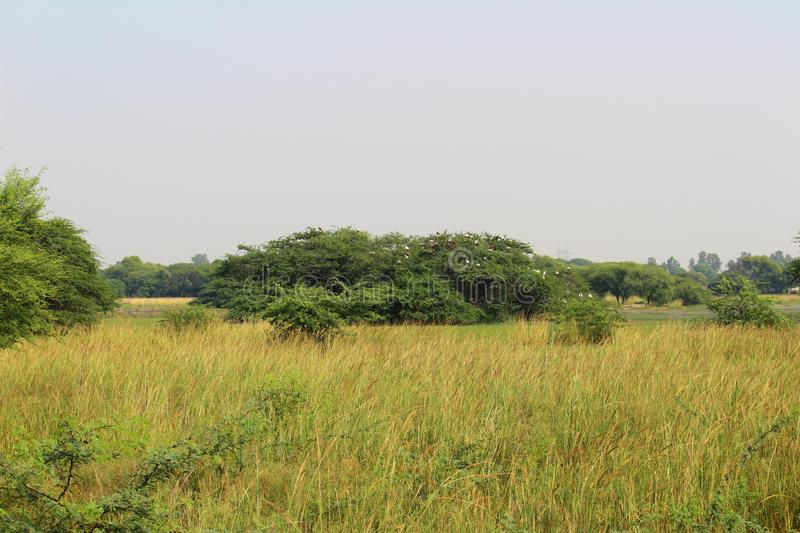 Sultanpur National Park. View of Sultanpur National Park located in Gurugram Haryana. The park is famous for local and migratory birds royalty free stock images