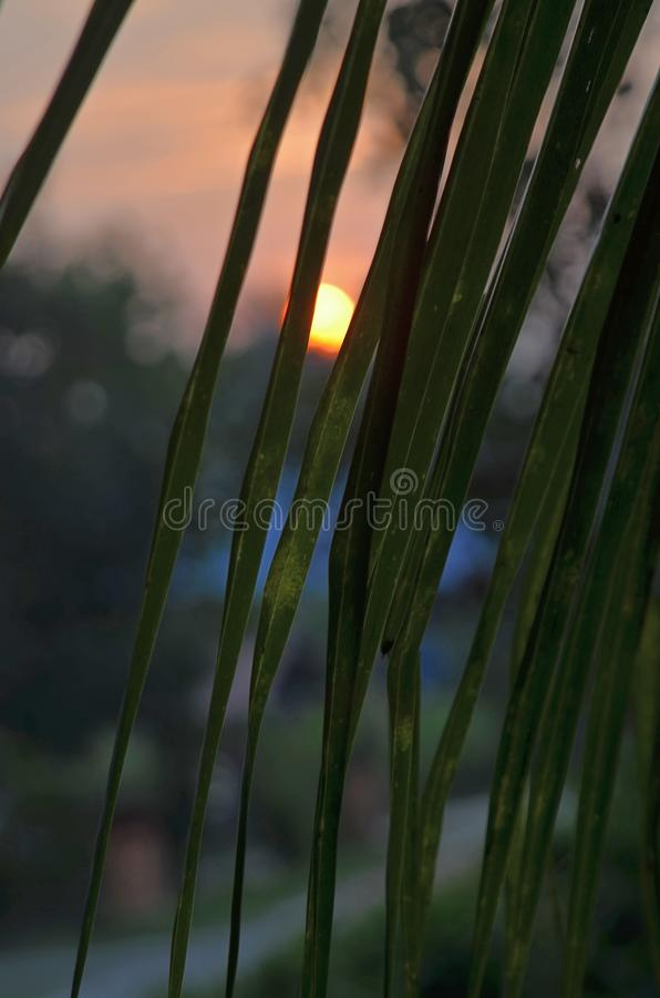 View of sun betwen a silhouette coconut leaves in sunset scene stock photo