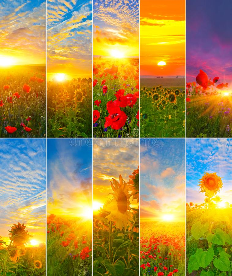 View of sunflowers and poppies with rising sun. Set of vertical backgrounds of sunrise stock photography