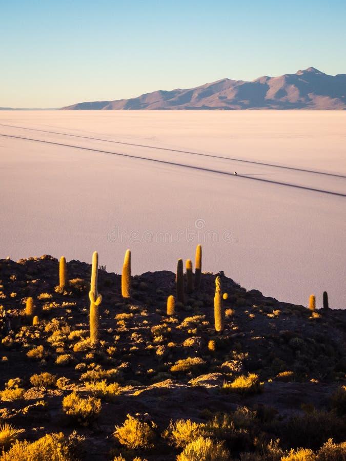 View on sunrise over island incahuasi by salt lake Uyuni in Bolivia. Panoramic royalty free stock photos