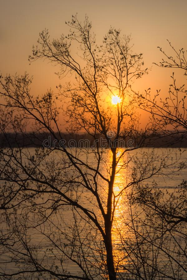 Sunset over the river through the trees. stock photo