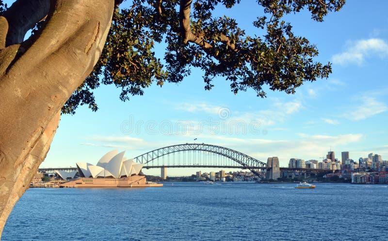 View of Sydney Opera House, Bridge & Moreton Bay Fig royalty free stock photography