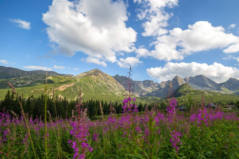 View of the Tatras mountains and colorful flowers in Gasienicowa valley royalty free stock photography