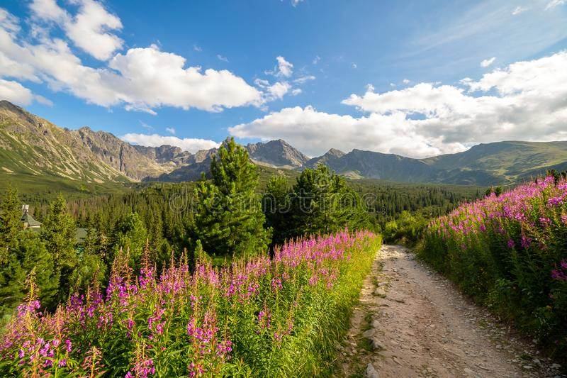 View of the Tatras mountains and colorful flowers in Gasienicowa valley stock photo
