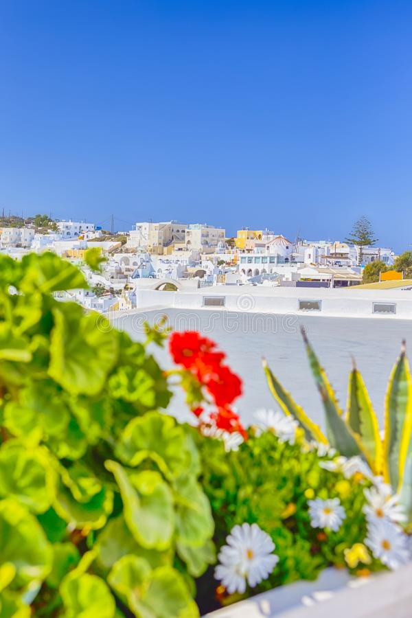 Panoramic View of Thira City on santorini Island in Greece with Flowers on Foreground. Focus on Flowers. View of Thira City on santorini Island in Greece with royalty free stock photo