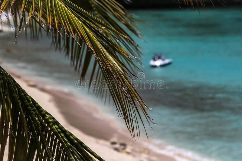 View thru tropical plant royalty free stock image