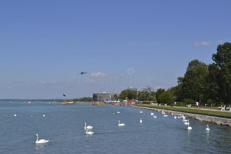 View to a beach with white swans in front. Of it royalty free stock images