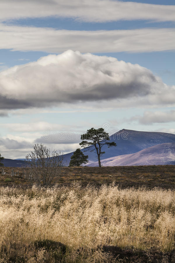 Download View To Ben Rinnes In Scotland Stock Image - Image: 88200811