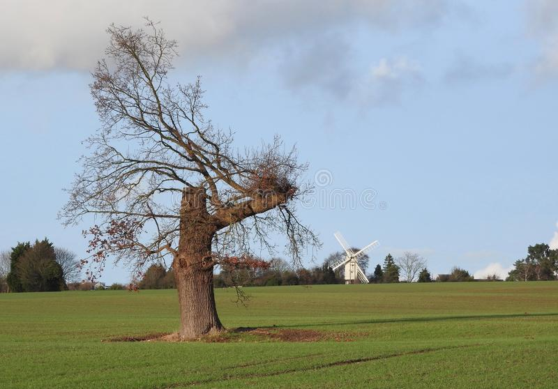 View to Bocking Windmill stock photography