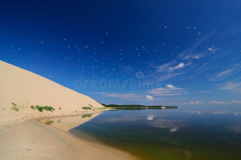 View to curonian spit from the bay, Russia, Zelenogradsk. A flock of seagulls fly over the Curonian Spit and reflected in the mirrored surface of the Curonian stock photos