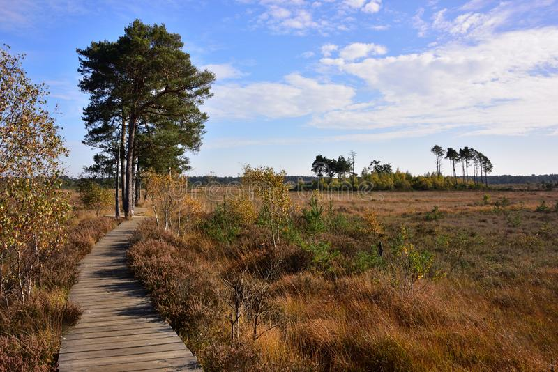 View to the East Along the Main Boardwalk on Thursley Common in Surrey royalty free stock images