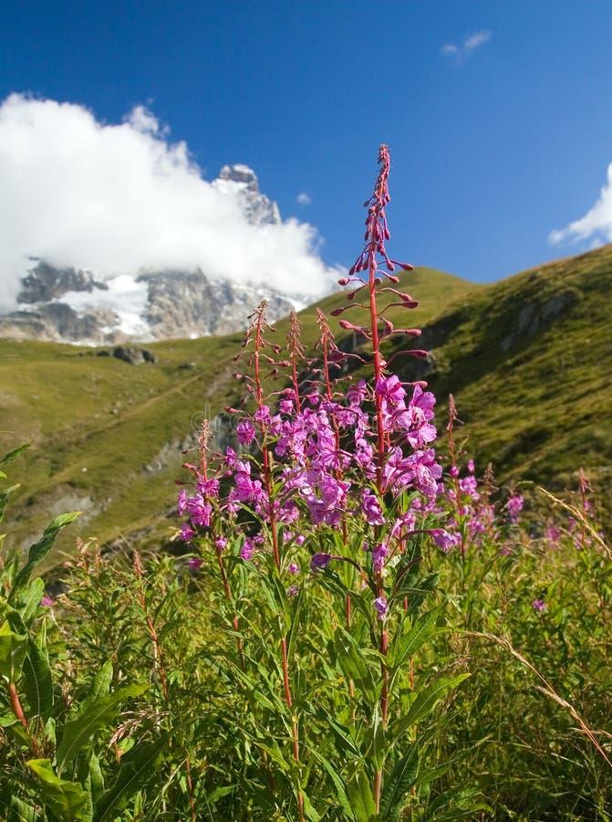 View to Matterhorn stock image