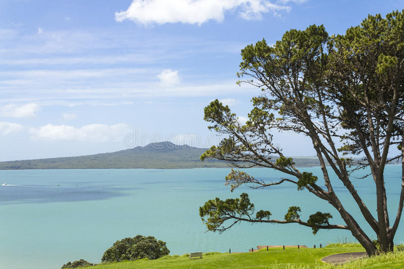 View to Rangitoto Island from North Head Auckland New Zealand. Pohutukawa Tree at the Front royalty free stock photography