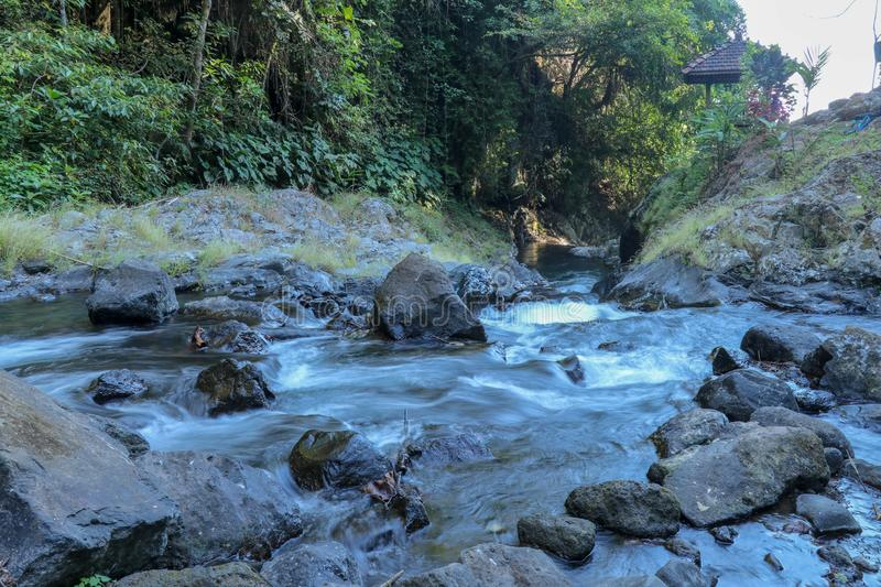 View to scenic mountain river with rapid and noisey stream of turquoise-blue water and growing trees on rocks in natural in Bali. royalty free stock images