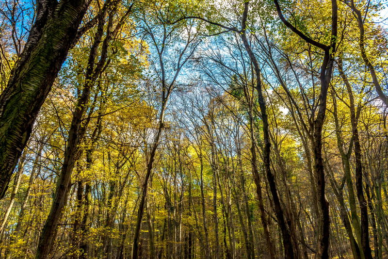 View to sky through deep colorful autumn forest stock images