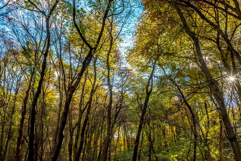 View to sky through deep colorful autumn forest royalty free stock photo