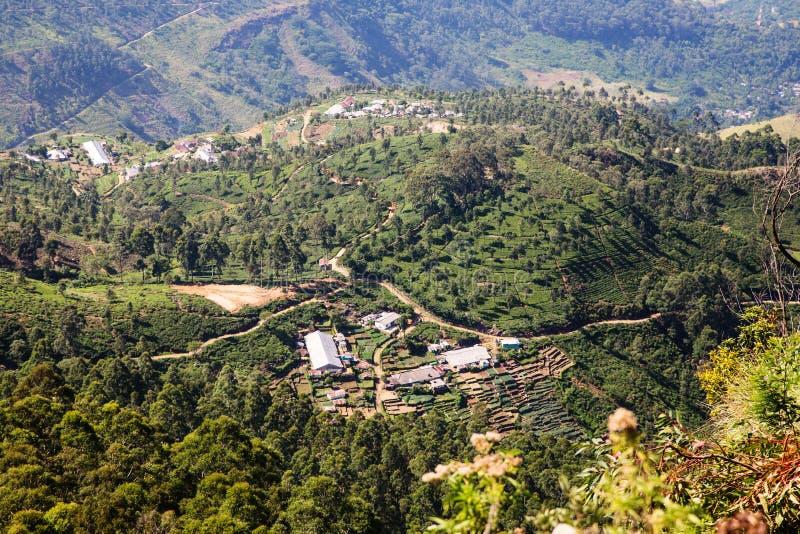 Tea plantation in Sri Lanka royalty free stock photo