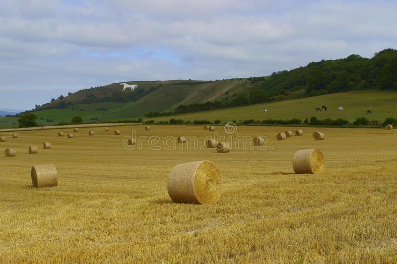 Westbury White Horse.Wiltshire,England. View to Westbury White Horse, Wiltshire at harvest time.The White Horse is a famous local landscape. It is believed to royalty free stock image