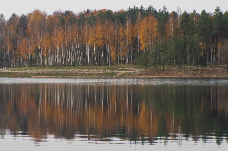 View to the yellow colored autumn forest over the lake with the beautiful reflections in the water. View to the yellow colored autumn forest in Ogre Zilie Kalni stock image
