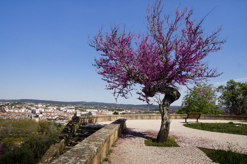 View of Tomar Portugal stock images