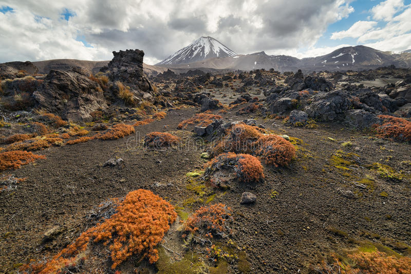 View of Tongariro national park and Mt Ngauruhoe with colorful g stock photography