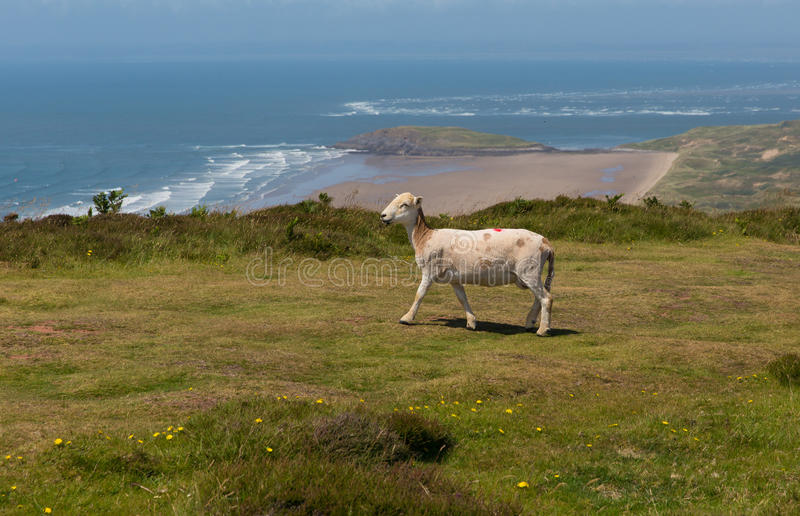 View from the top of Rhossili Down to Burry Holms and Hillend The Gower Wales UK in summer stock photos